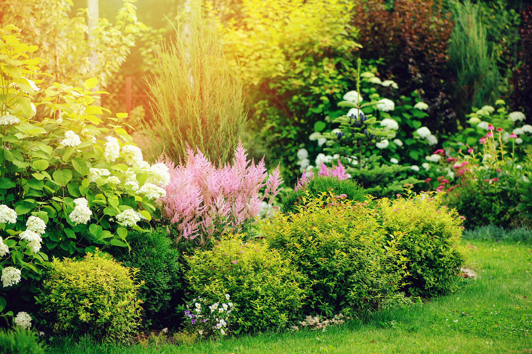 Spruce Up Your Shrubs and Bushes