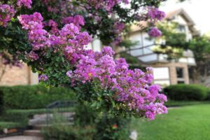 Gardening Tips and Recommendations for Texas Gardens