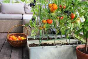The Guide to Starting Your Own Vegetable Garden at Home in the Carolinas