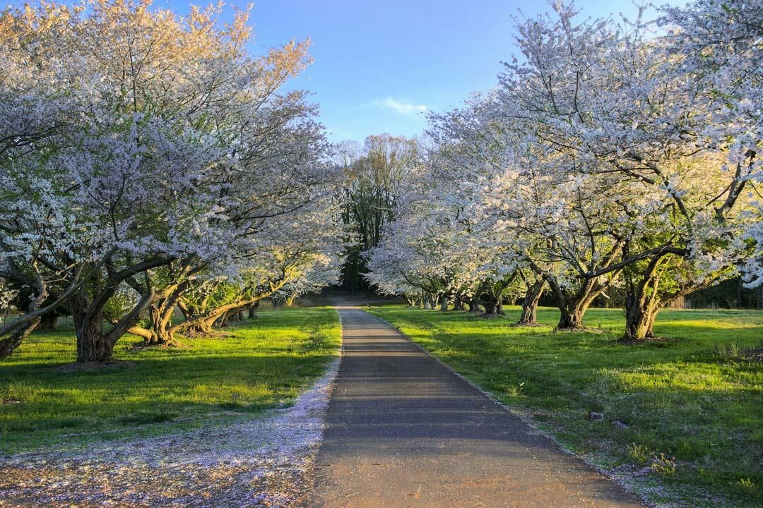 McLean - The Conservancy Walking Trails