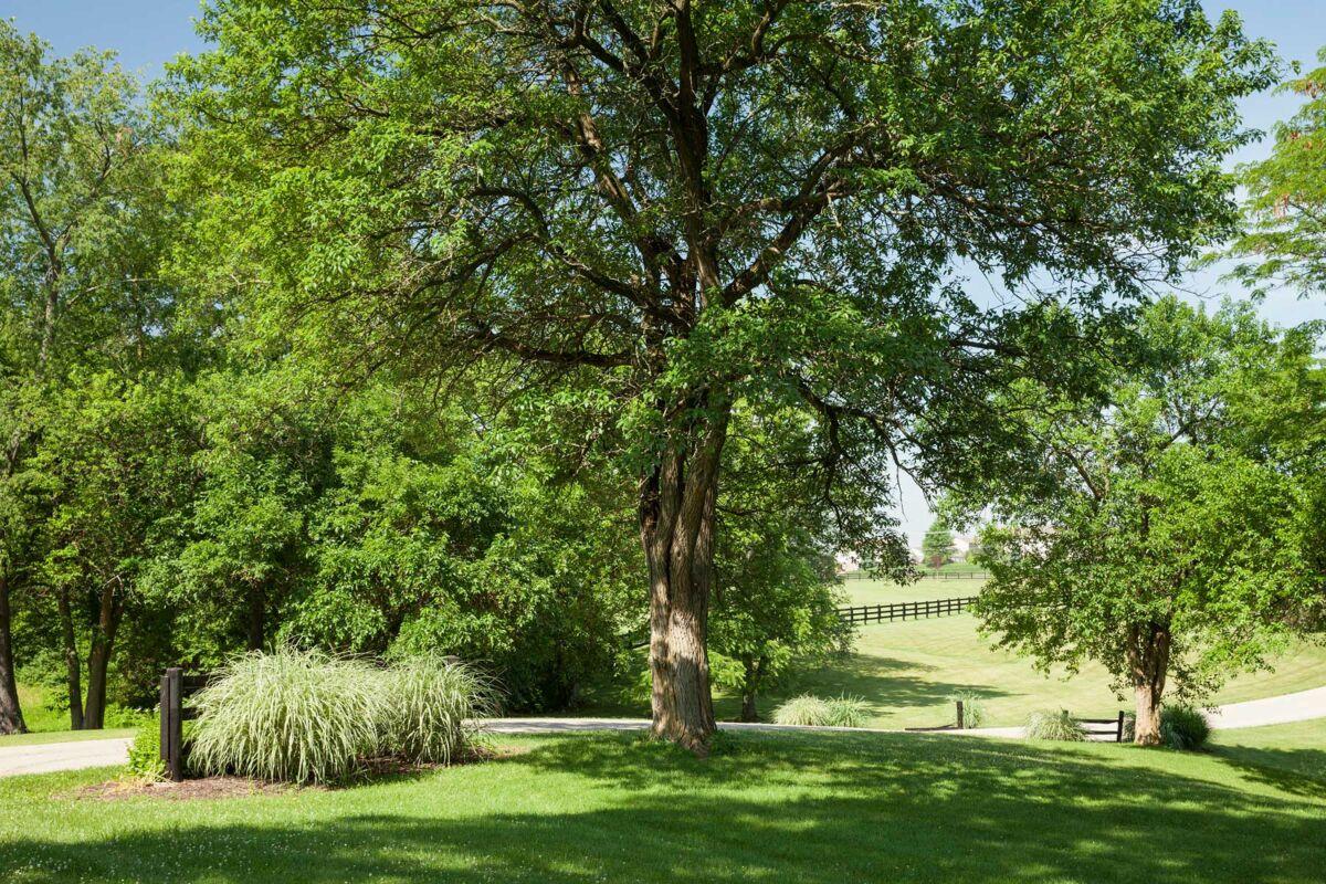 Carriage Hill Enclave Park