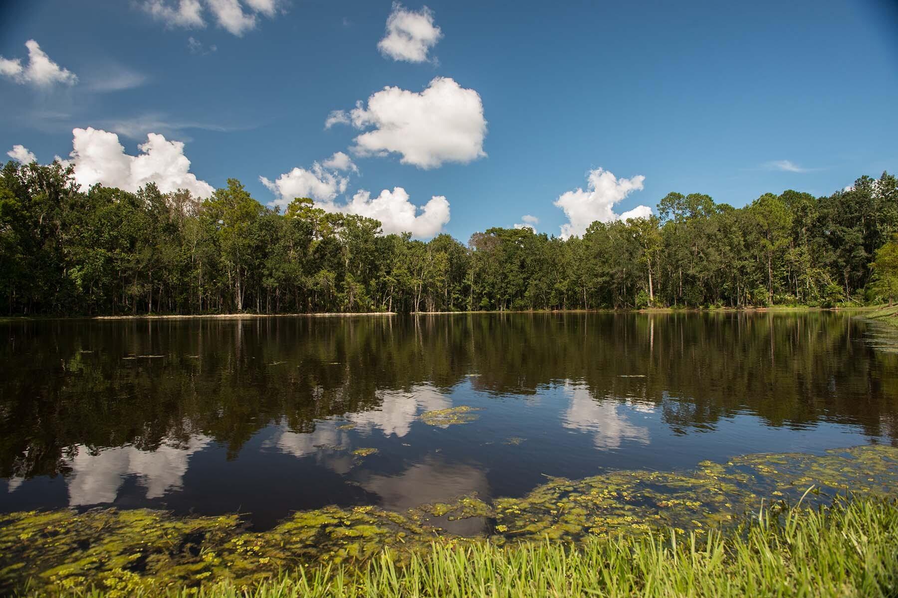 Bay Meadow Farms Lake